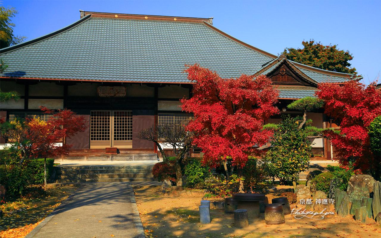 神應寺 紅葉と本堂 壁紙