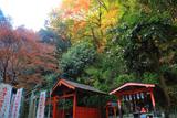 神應寺 豊川稲荷に山茶花と紅葉