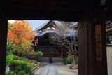 本教寺 山門越しの柑橘紅葉と本堂