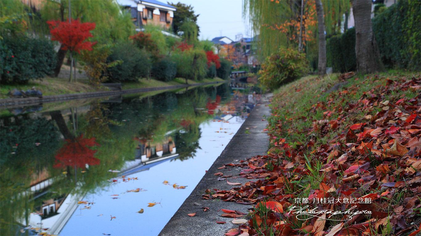 月桂冠大倉記念館 東濠川の水鏡と落葉 壁紙