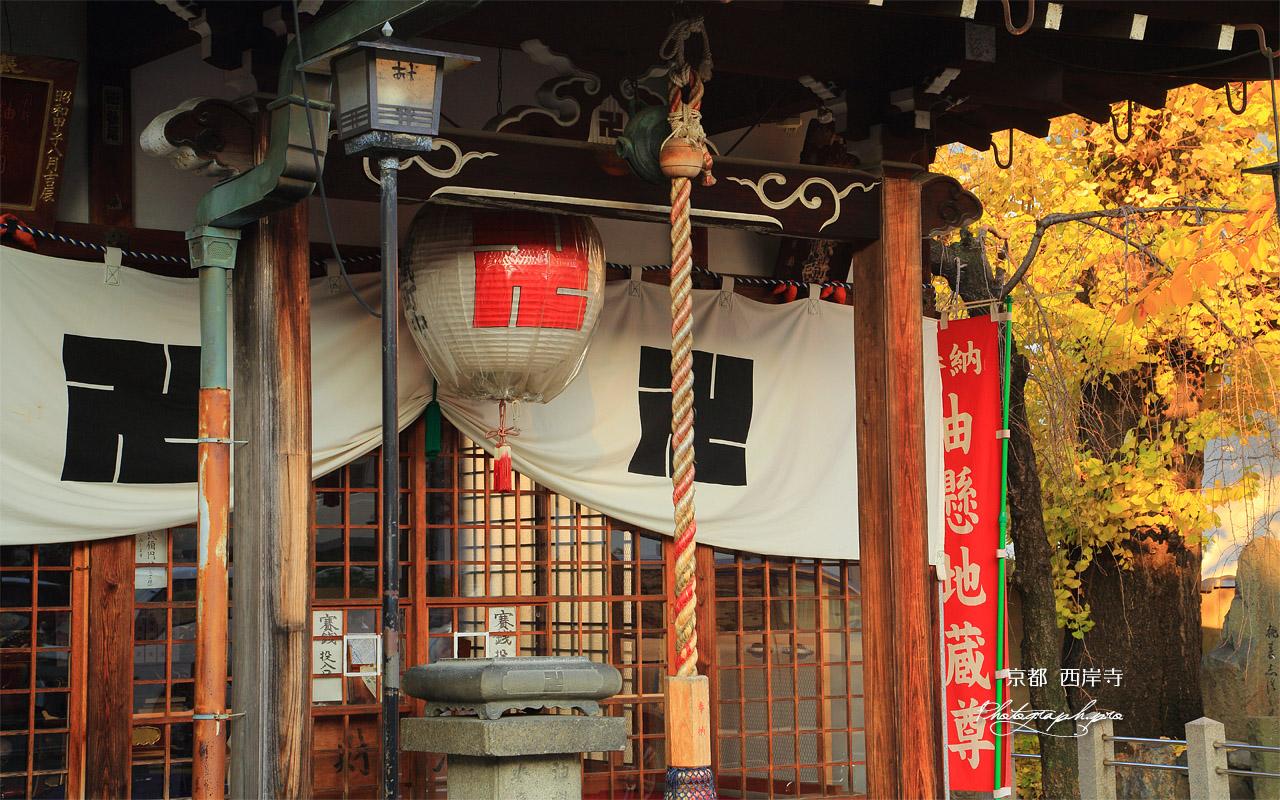 伏見 西岸寺地蔵堂と銀杏黄葉 壁紙
