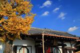 龍雲寺 銀杏黄葉と本堂