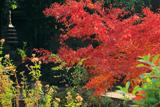 欣浄寺 庭園の紅葉