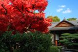 海宝寺 紅葉と玄関