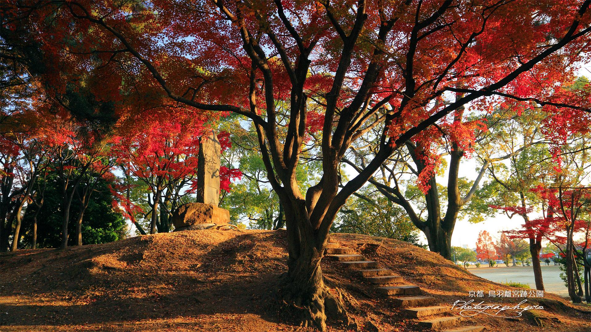 鳥羽離宮跡公園 秋ノ山の紅葉 の壁紙 19x1080