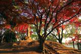 鳥羽離宮跡公園 秋ノ山の紅葉
