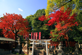花山稲荷神社 境内社と紅葉