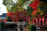 花山稲荷神社 紅葉と本社