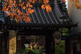 京都瑞泉寺 桜紅葉と山門