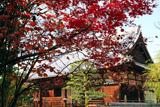天性寺 紅葉と本堂