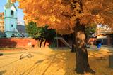 京都ハリストス正教会 富小路殿公園の敷銀杏