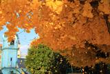 京都ハリストス正教会 イチョウ落葉と受胎告知聖塔