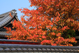 宗徳寺 桜紅葉と粟嶋堂