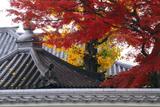 新善光寺 紅葉と黄葉