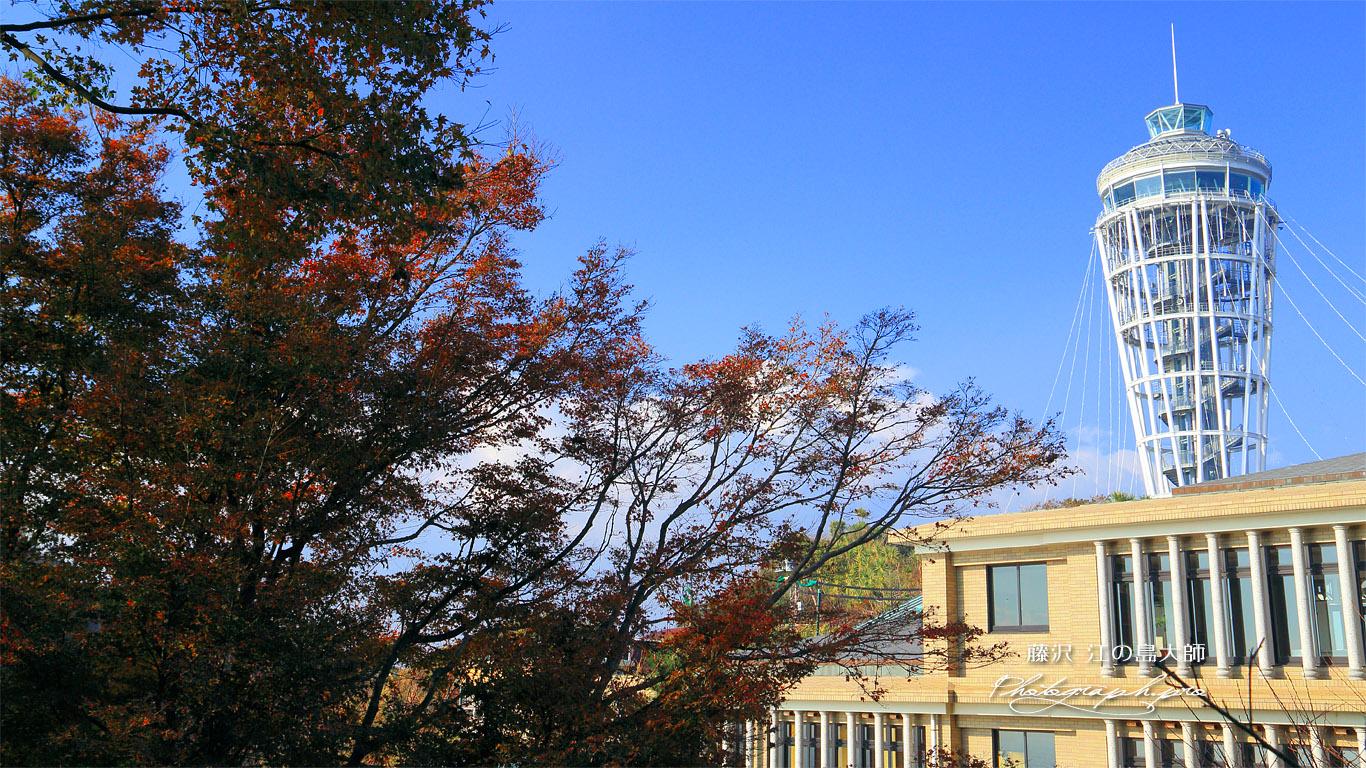 紅葉と江の島大師 壁紙