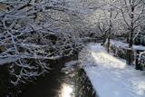 哲学の道 疏水の反射朝陽と雪の花