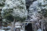 八神社 雪化粧の下境内