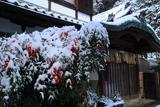 八神社 社務所の雪ナンテン