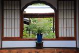 聖澤院 鉢植植物と花頭窓越しの残雪