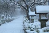 吹雪の段葛