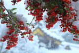 常栄寺 雪中のピラカンサ