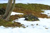 長寿寺 斑雪の苔庭