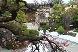 東漸寺 源平咲き分けの梅