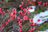 宝善院 紅梅と残雪