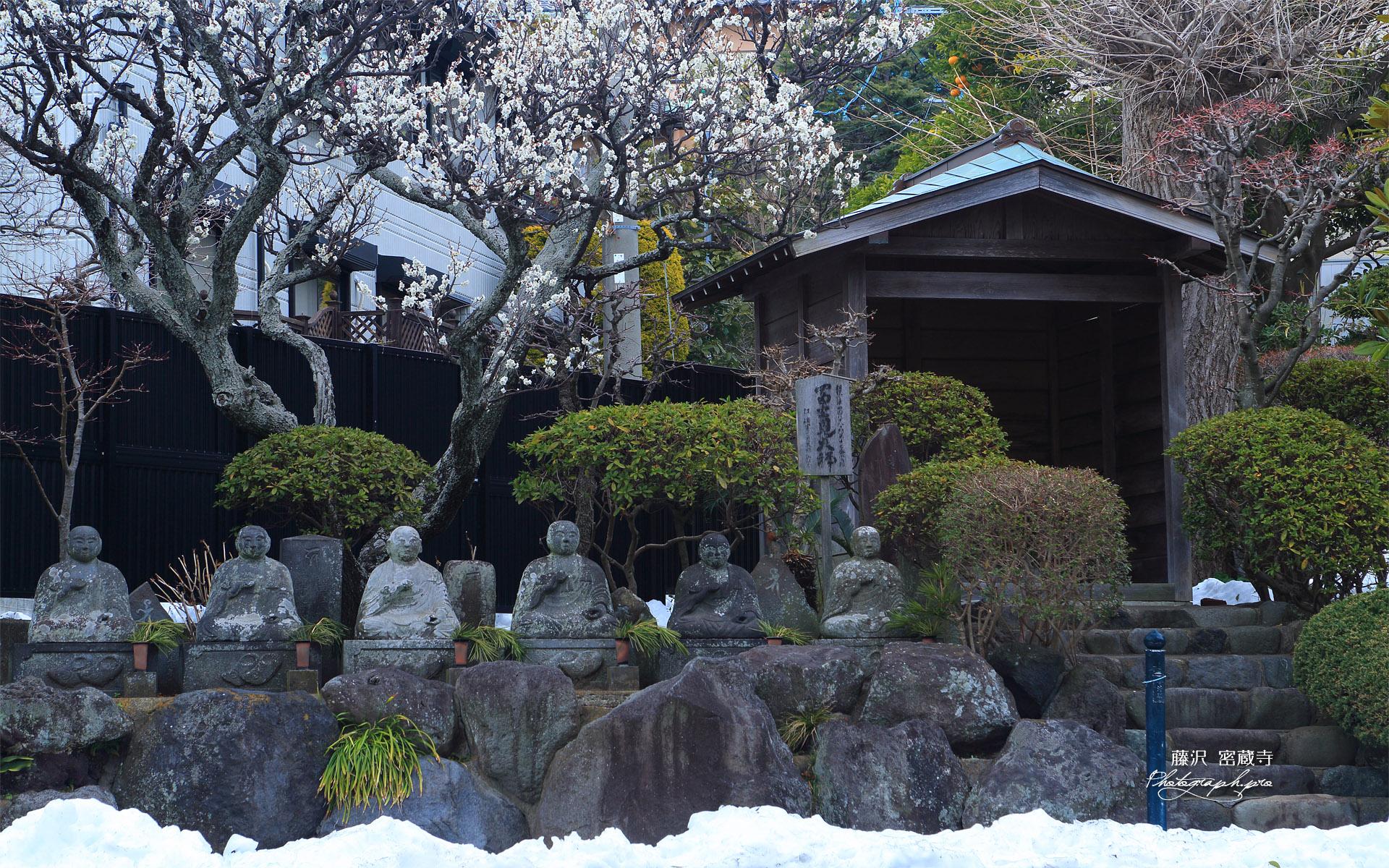 残雪の密蔵寺の白梅