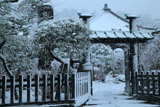 収玄寺雪景色