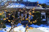 大慶寺 ロウバイと残雪