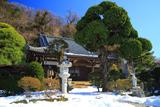等覚寺 残雪とビャクシン
