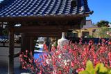 泉光院 紅梅と山門