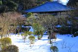 昌清院 雪見庭園の梅