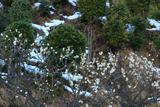 玉泉寺 白梅と残雪