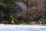 称名寺 残雪と白梅