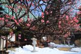 金龍院 梅と残雪の境内