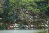 鎌倉 薄氷張る夫婦池