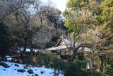 円光寺 白梅と残雪