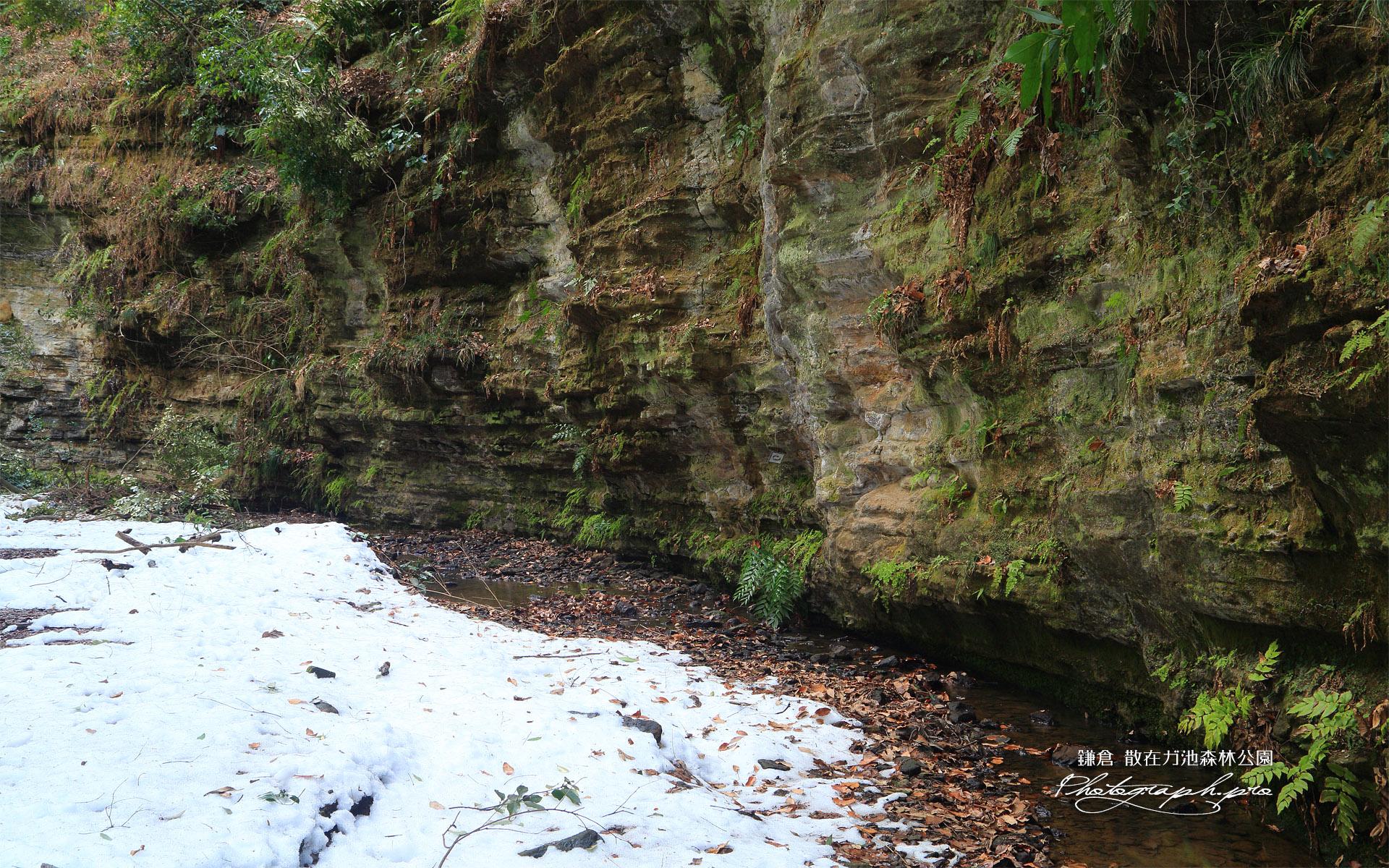 散在ガ池森林公園 せせらぎの小径の残雪