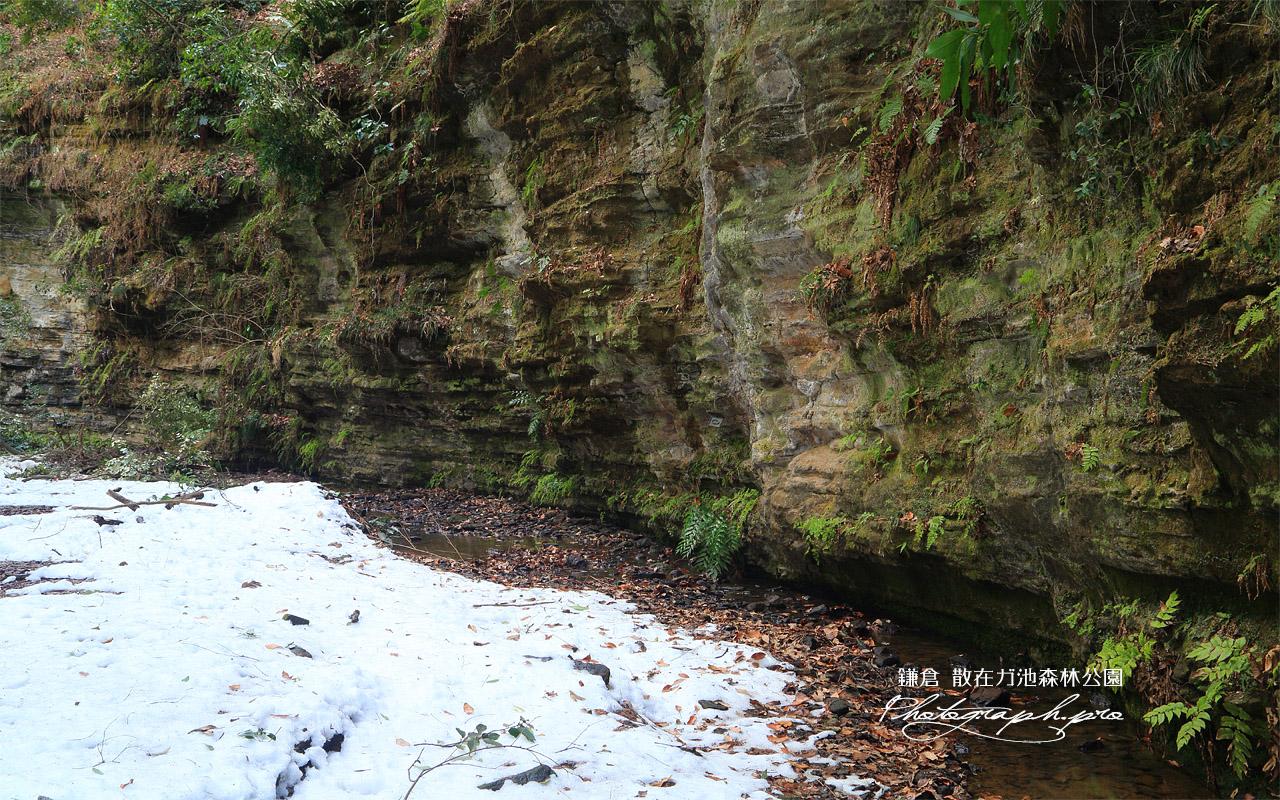 散在ガ池森林公園 せせらぎの小径の残雪 壁紙