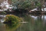 散在ガ池森林公園 オシドリと斑雪