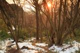 鎌倉 斑雪の獅子舞の夕景