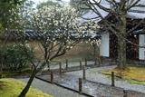 大仙院 降雪の白梅と玄関