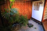 観智院 坪庭のセンリョウ