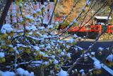 大田神社 福徳社の淡雪蝋梅