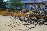 龍泉庵 白梅と方丈庭園
