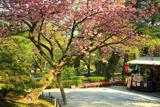 兼六園の関山