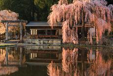 岐阜県の桜