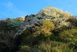 桜咲く広町緑地